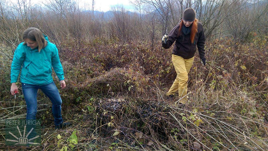 V Rajci sme išli do okolia, našli a orezali vŕby vhodné na košikárenie | Peter Juriga